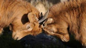 Konflikte im Team: Konfliktfähigkeit geht anders.